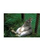 Ogrodzenia dla ptaków, klatki dla drobiu i królików